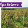 Vigne Bio Ouverte chez Champagne Marc Augustin